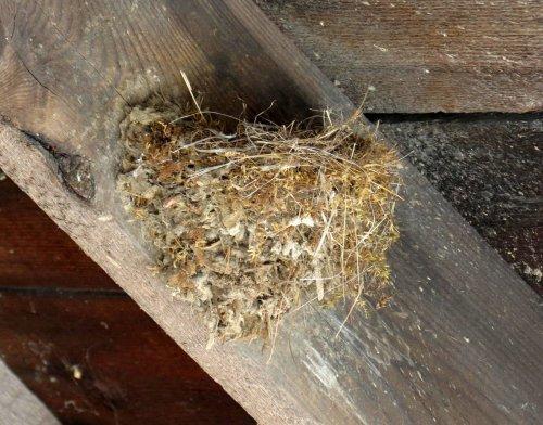 20-bird-nest