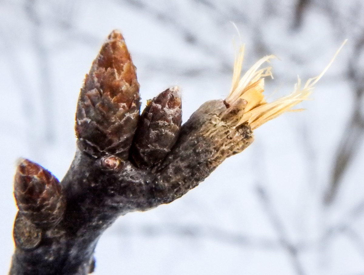 8-oak-branch