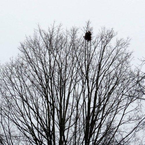 9-squirrel-nest