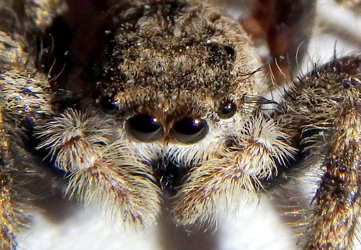 8-spider