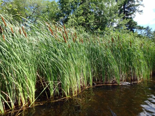 Wilson Pond | New Hampshire Garden Solutions