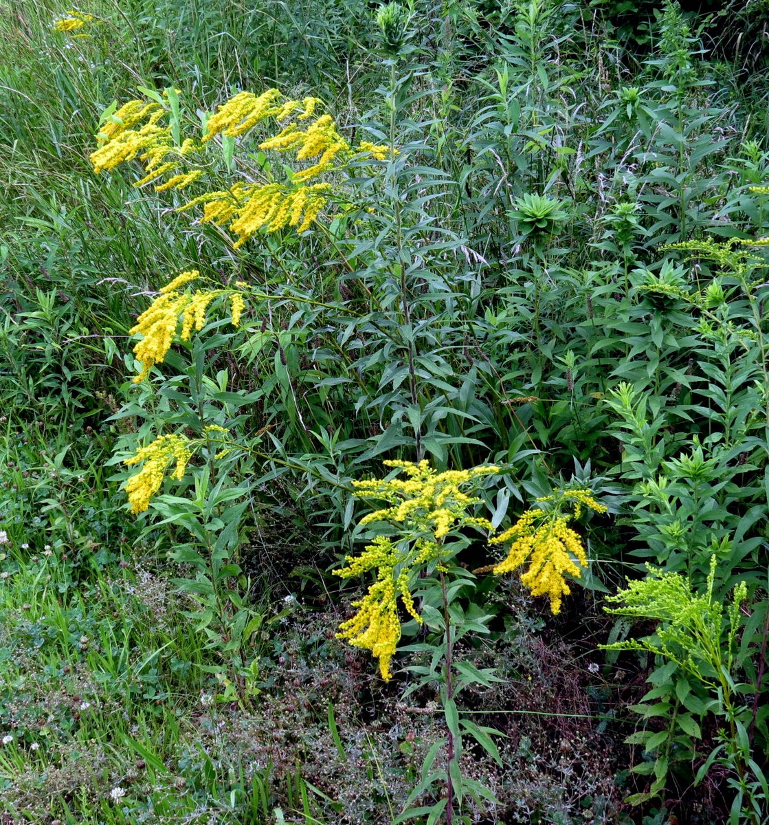 Early August Flowers New Hampshire Garden Solutions