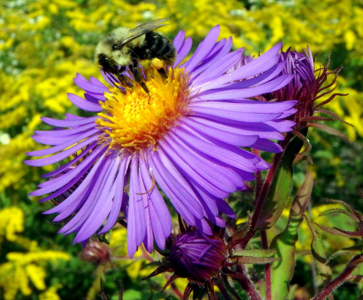 Mid September Flowers New Hampshire Garden Solutions