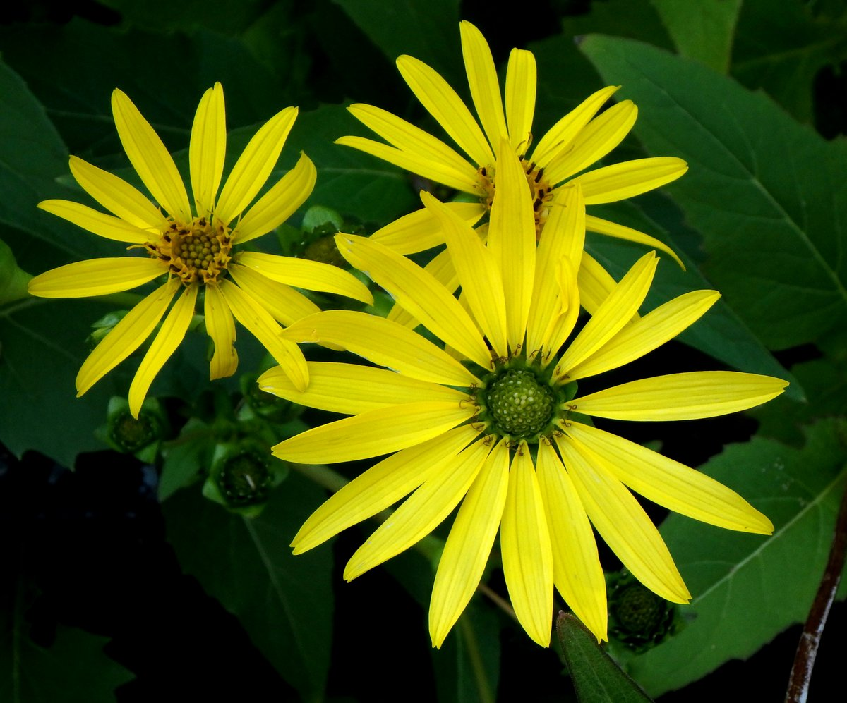 Late Summer Flowers New Hampshire Garden Solutions