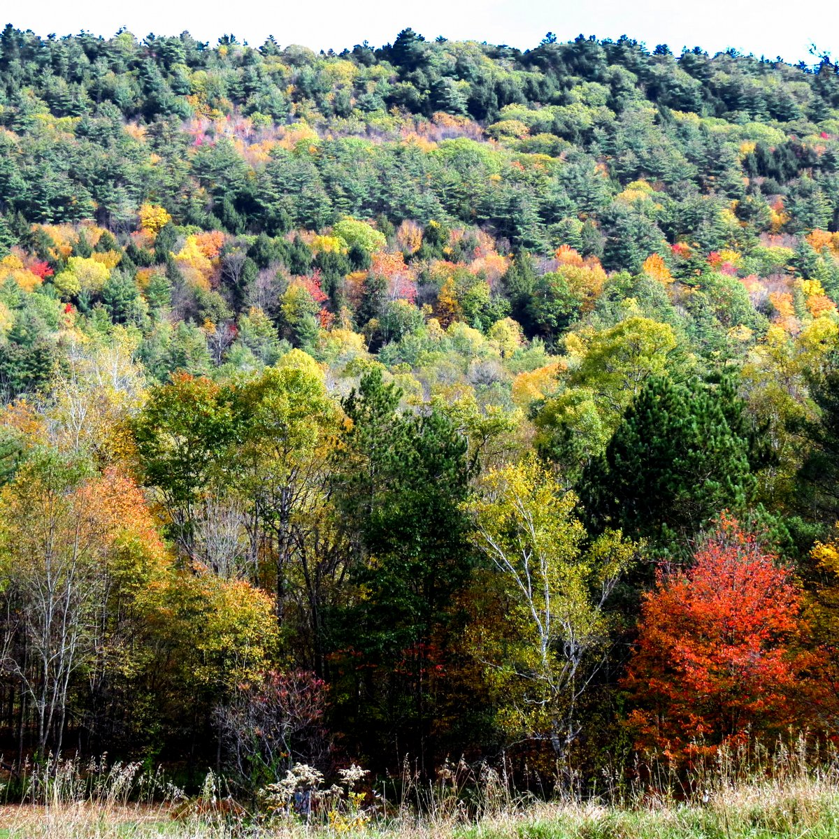 More Fall Foliage | New Hampshire Garden Solutions