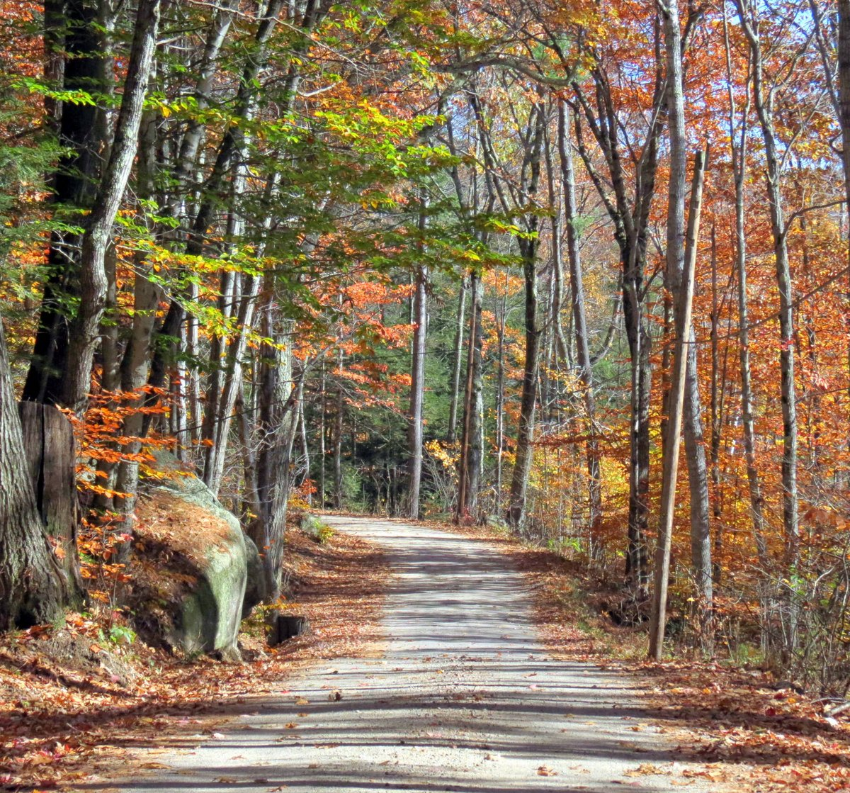 Forest Bathing | New Hampshire Garden Solutions