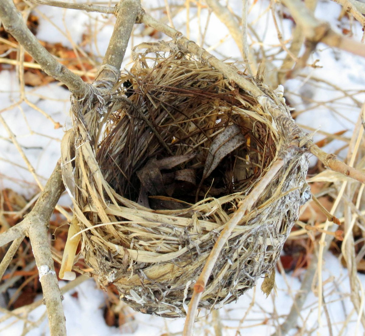 Bird's Nest | New Hampshire Garden Solutions Bird Nest With Bird