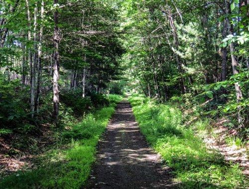 Ox Eye Daisy | New Hampshire Garden Solutions