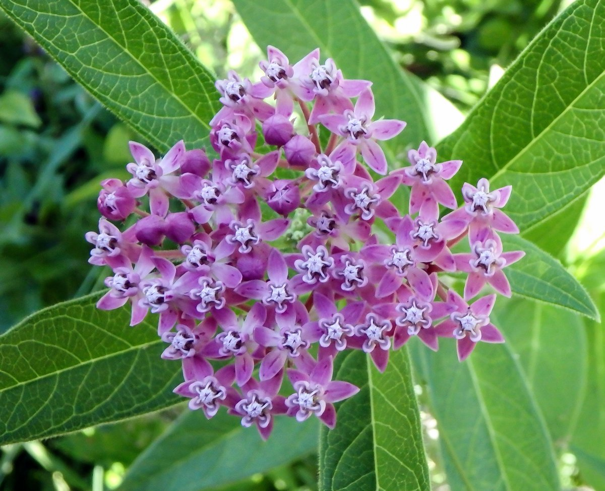 Early July Flowers New Hampshire Garden Solutions