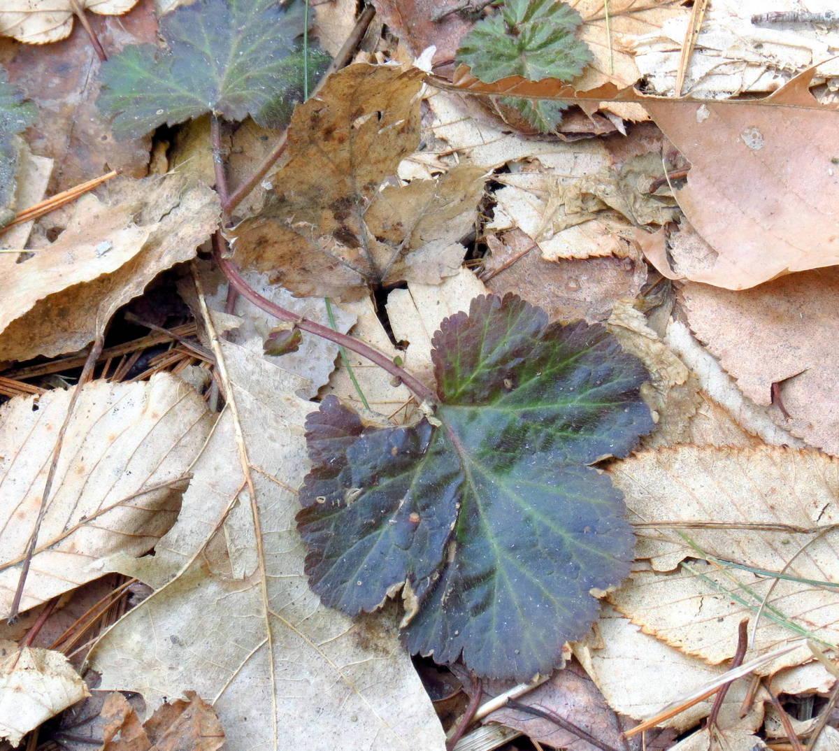 20. Unknown Leaf